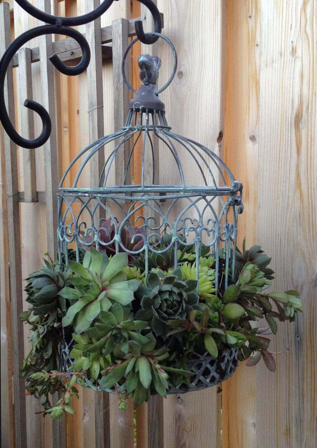 Metal Bird Cage Succulent Planter